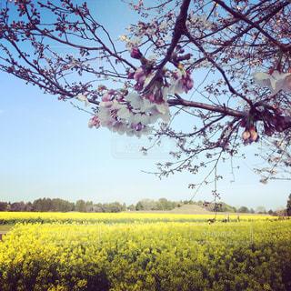 春の西都原の写真・画像素材[1096475]