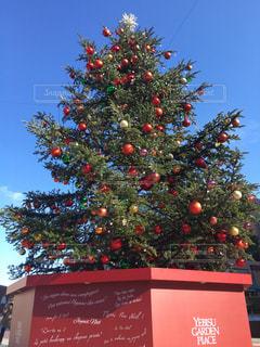 クリスマスツリーの写真・画像素材[1096599]