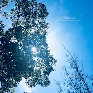 陽射しの写真・画像素材[1097629]