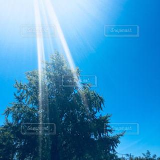 陽射しが降り注ぐの写真・画像素材[1097641]