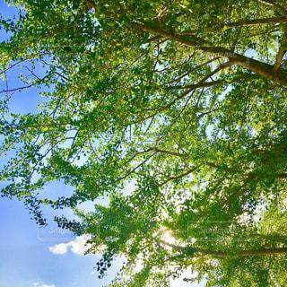 新緑が眩しい季節の写真・画像素材[1114607]