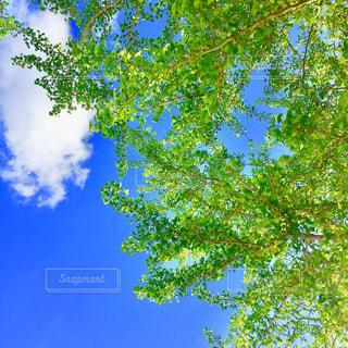 新緑が眩しい季節の写真・画像素材[1114612]