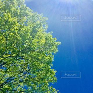 新緑の写真・画像素材[1134088]