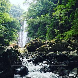 滝の写真・画像素材[1174262]