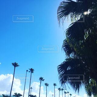 青空の写真・画像素材[1324965]