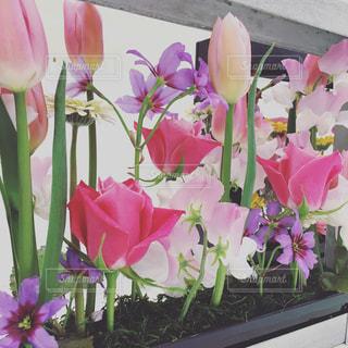 春の写真・画像素材[1453013]