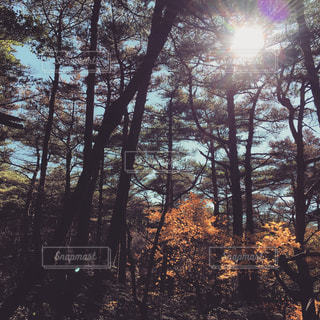 空,秋,紅葉,木,季節,山,トレッキング,登山,木々,陽射し,秋空,樹々,季節の変わり目