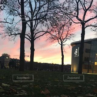 空,秋,夕日,木,夕焼け,夕暮れ,木々,落ち葉,樹木,美術館,オランダ,夕陽,夏の終わり,秋空,樹々,季節の変わり目