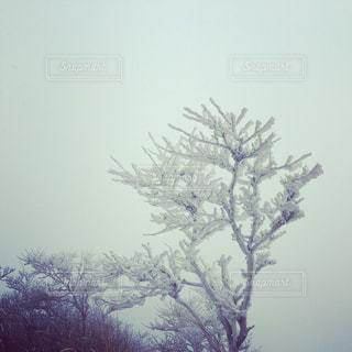 樹氷の写真・画像素材[1659913]