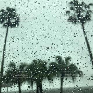 雨の中のヤシの木のグループの写真・画像素材[2175495]