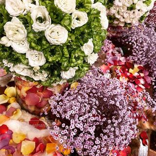 花のクローズアップの写真・画像素材[2952290]