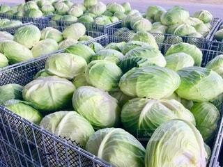 食べ物,緑,野菜,食品,キャベツ,コンテナ,収穫,出荷,食材,フレッシュ,ベジタブル,鉄コンテナ