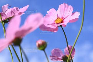近くの花のアップの写真・画像素材[1124079]