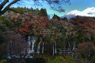 背景の山と木の写真・画像素材[1604512]