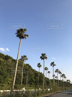 ツリーの横にあるヤシの木のグループの写真・画像素材[1250812]