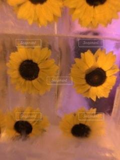 花のクローズアップの写真・画像素材[3529313]