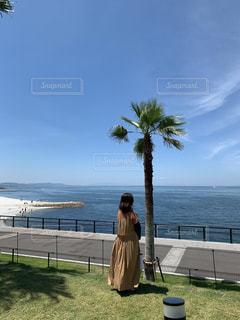 ヤシの木と女性の写真・画像素材[3556832]