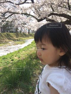 桜並木と少女の写真・画像素材[1127170]