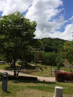 緑と青空の爽やかな公園の写真・画像素材[1168028]