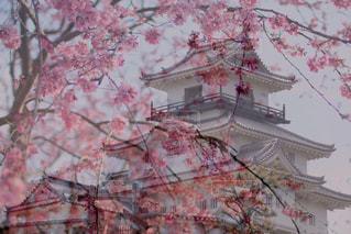 花,桜,インスタ映え