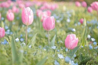 花,かわいい,カラフル,チューリップ,鮮やか,インスタ映え