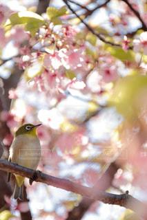 小鳥が枝の上に座って - No.1133964
