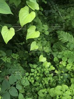 自然,緑,ハート,癒し,グリーン,ハートフォト