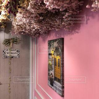 赤白とピンクの花の写真・画像素材[1472107]