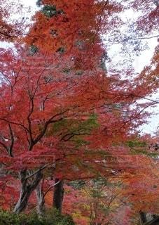 自然の写真・画像素材[2665499]