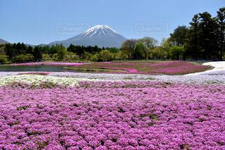 背景に富士山とフィールドの写真・画像素材[1131591]