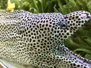 近くに魚のアップの写真・画像素材[1088297]