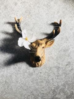 シカ美と花びらの写真・画像素材[1085081]