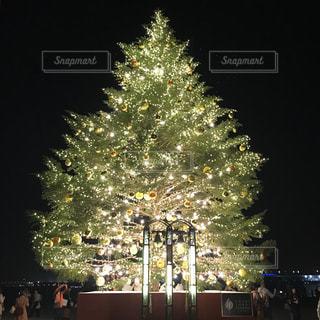 クリスマスツリーの写真・画像素材[1689932]