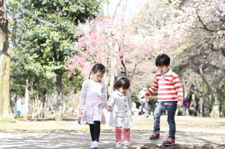子ども,公園,春,桜,ピンク,お花見,井の頭公園,さくら,開花