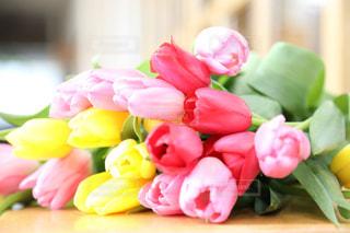 花の写真・画像素材[2022456]