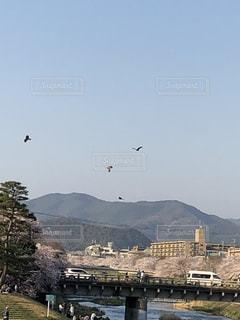 京都高野川を上を飛ぶ鳥たちの写真・画像素材[1121147]