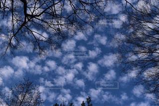 うろこ雲と秋の空の写真・画像素材[1110234]