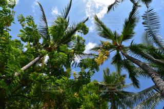 花,夏,緑,南国,雲,青空,青,ヤシ,ハワイ,夏休み,リゾート,快晴