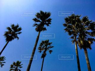 青空とヤシの木の写真・画像素材[1098909]