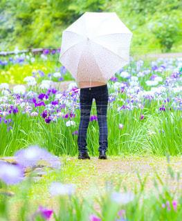 花しょうぶ,砺波市,頼成の森