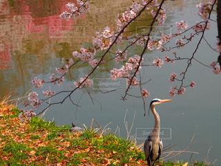 2018.3.26 大阪@鶴見緑地公園の写真・画像素材[1122665]
