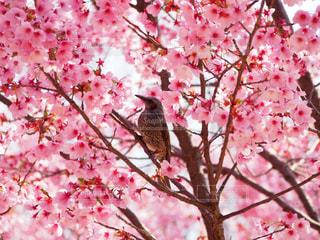 2018.3.26 大阪@鶴見緑地公園の写真・画像素材[1122669]