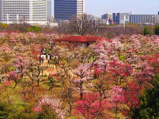 2018.3.13大阪@大阪城公園の写真・画像素材[1122681]