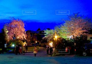 🌸夜桜🌸の写真・画像素材[1128551]