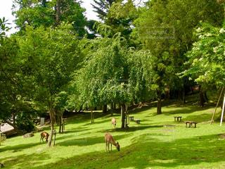 自然を楽しむ鹿たち🦌🌿の写真・画像素材[1181284]