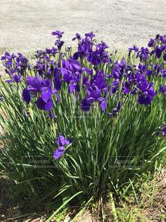 花,屋外,旅行,5月,長野