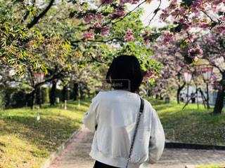 自然,空,花,春,桜,木,植物,雲,青空,景色,♡,造幣局,花のまわりみち