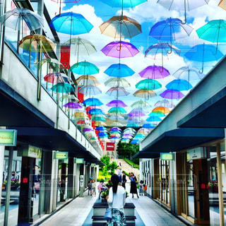 傘の花咲くの写真・画像素材[800303]