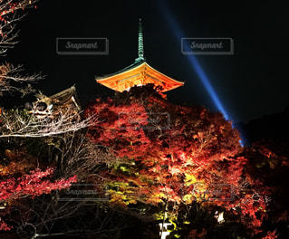 清水寺のライトアップの写真・画像素材[840473]