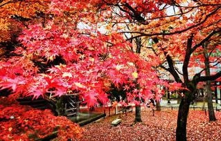 森の大きな木の写真・画像素材[840475]